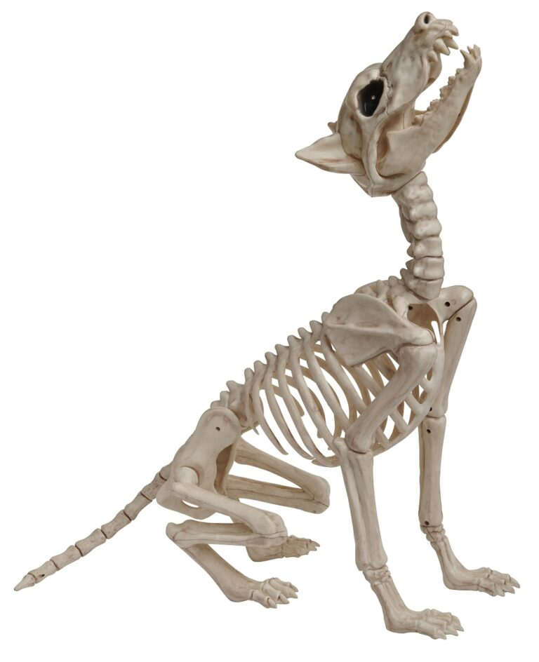 Animated Skeleton Wolf £30 Wilko