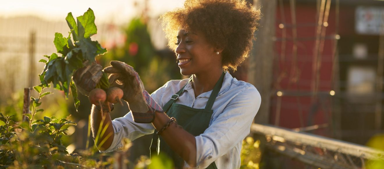 Young,African,American,Woman,Inspecting,Beets,Just,Pulled,From,The