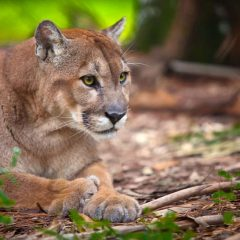 Florida wildlife holidays